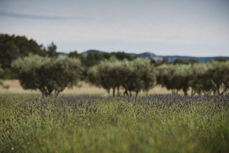 Hochzeitsfotografie Provence- Destination Hochzeit- Beginn get together - Lavendelfeld