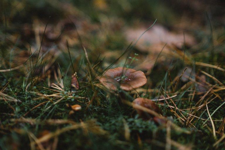 After-Wedding-Session-Hamburg- Einleitungsbild zum Thema After Wedding Shooting in der Heide. Zu sehen ist ein Pilz.