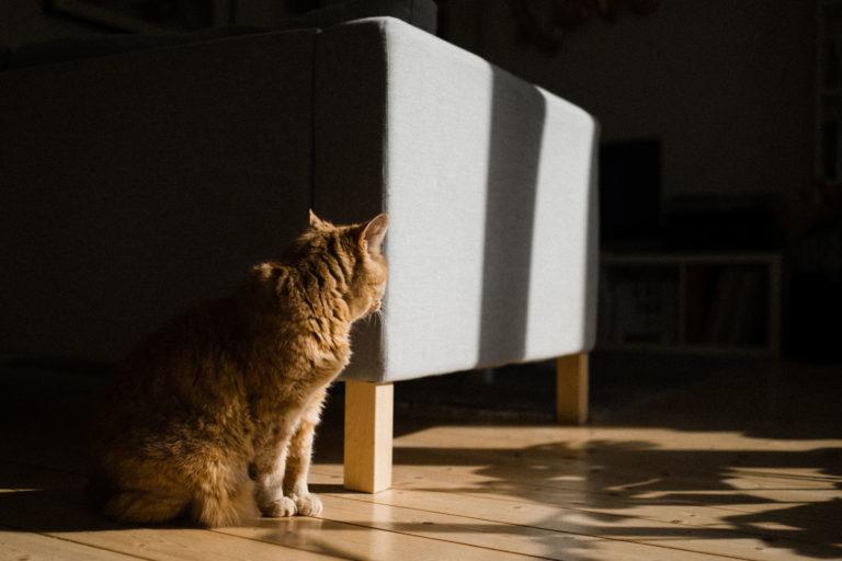 Die Katze unserer beiden Bräute, die in der Sonne sitzt und die Sonnenstrahlen genießt.